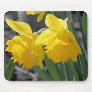 daffodils mouse pad