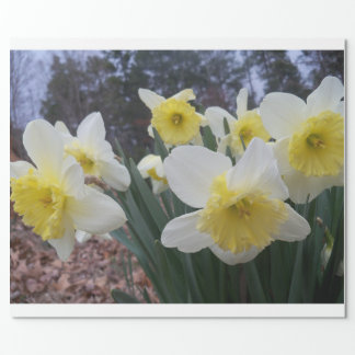 daffodils! wrapping paper