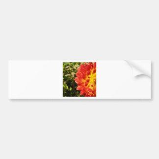 Dahlia Bumper Sticker