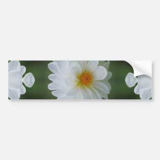 Dahlia flower and meaning bumper sticker