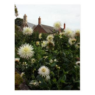 Dahlias in cottage garden post card