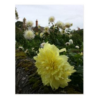 Dahlias in cottage garden postcard