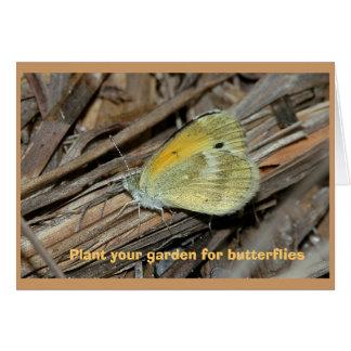 Dainty Sulphur butterfly, blank greeting card