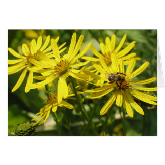 Daisies and Honey Bees Card