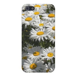 Daisies iPhone3 case iPhone 5/5S Cases
