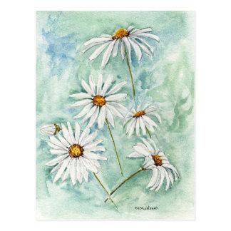 'Daisies' Postcard