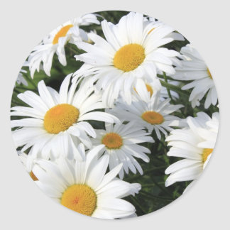 Daisy Flowers Growing White Classic Round Sticker