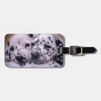 Dalmatian puppies couple luggage tag