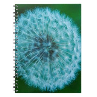 Dandelion in Blue Notebook