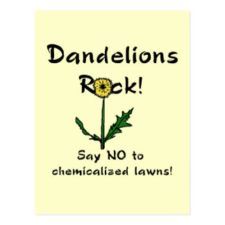 Dandelions Rock T-shirts and Gifts Postcard
