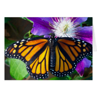 Dazzling Butterfly Note Card