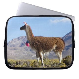 Decorated lama herd in the Puna, Andes mountains 2 Laptop Sleeve