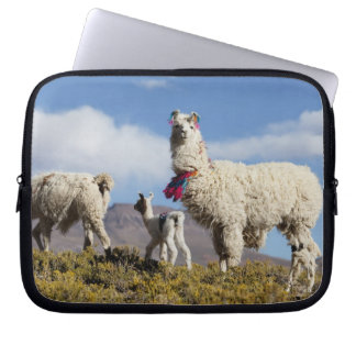 Decorated lama herd in the Puna, Andes mountains 3 Laptop Sleeve