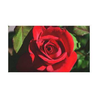 Deep Red Rose Canvas Print