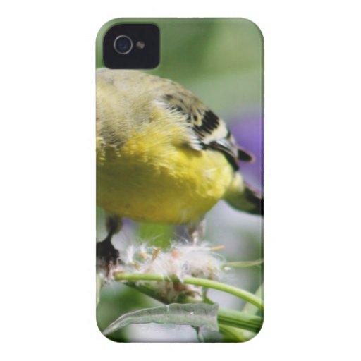 Dendelion Feast Case-Mate iPhone 4 Case