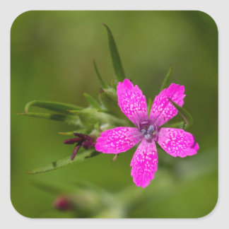 Deptford Pink Wildflower Floral Square Stickers