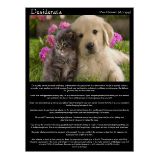 Desiderata kittens next to a puppy Posters Poster