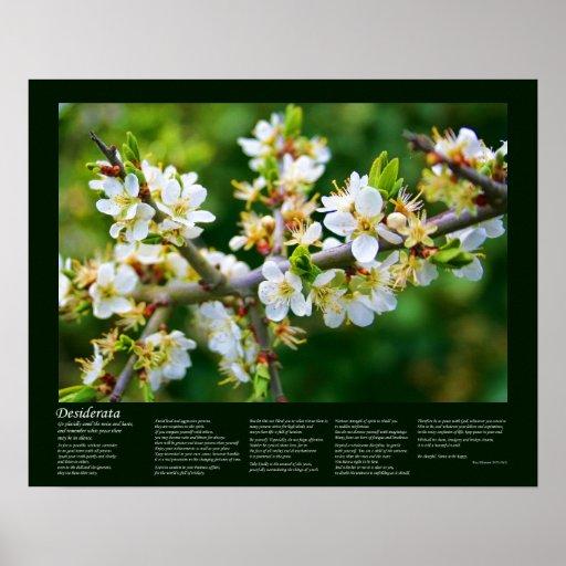 Desiderata - Sun-Dappled Spring Hawthorn Print