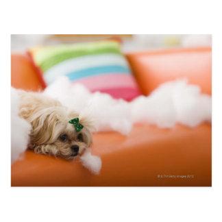 Destructive dog postcard