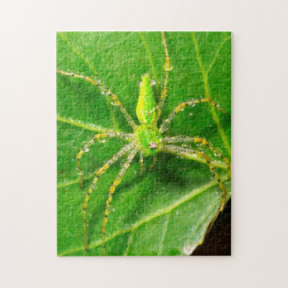 Dew on a Green Lynx Spider Jigsaw Puzzle