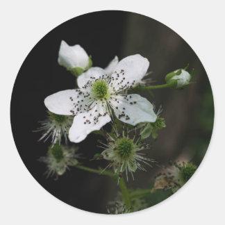Dewberry Wildflower Sticker