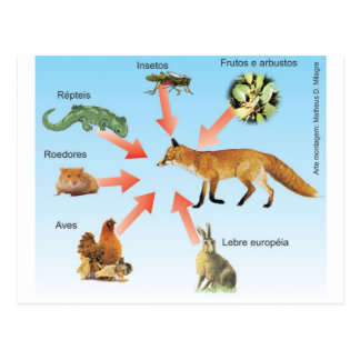 dietaraposa11 didactic project diet of the fox postcard
