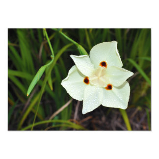 Dietes Bicolor African Iris Fortnight Lily 13 Cm X 18 Cm Invitation Card