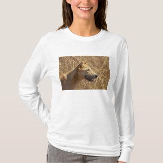 Dingo (Canis lupus dingo) T-Shirt