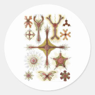 Discoidea Classic Round Sticker