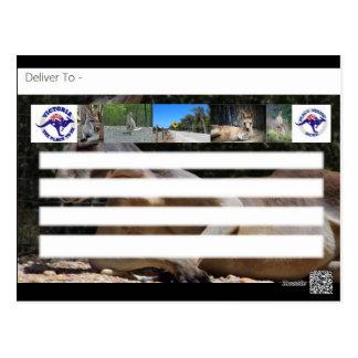 Discovering Australia Kangaroo Postcard