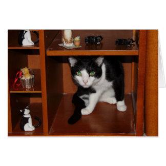 Display Cat Card