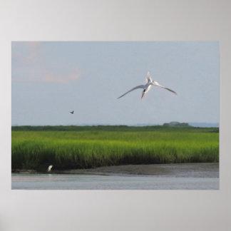 Diving Tern and Salt Marsh Nature Print