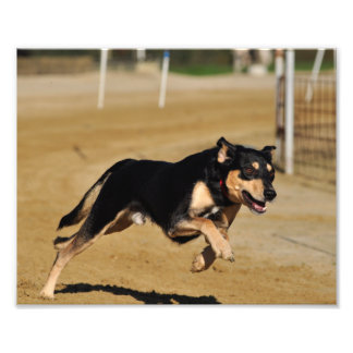 dog agility practicing photo print