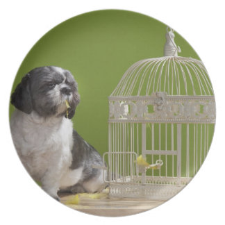 Dog close to a bird cage plate