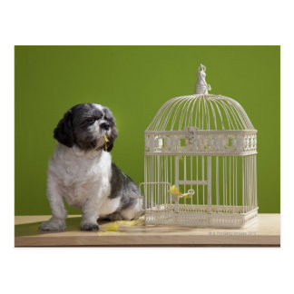 Dog close to a bird cage postcard