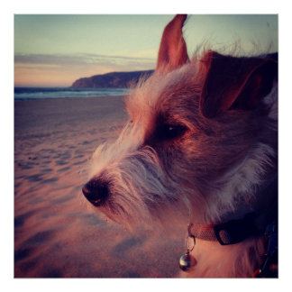 Dog Facing The Beach Poster