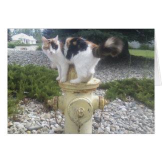 Dog Fantasy Cat On A Fire Hydrant Card