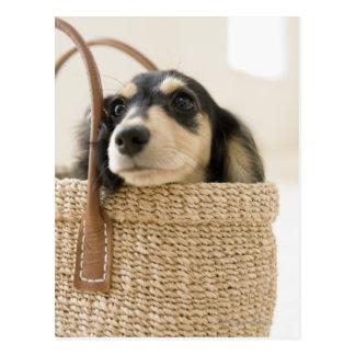 Dog in basket postcard
