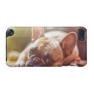 dog iPod touch (5th generation) cover