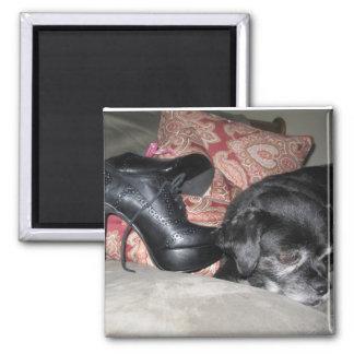 dog shoe magnet