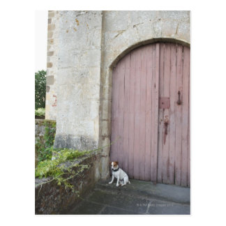 Dog sitting in front of closed doors postcard