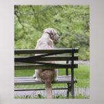 Dog sitting on park bench print