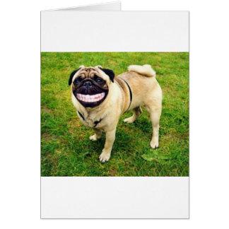 dog smile pug cute card
