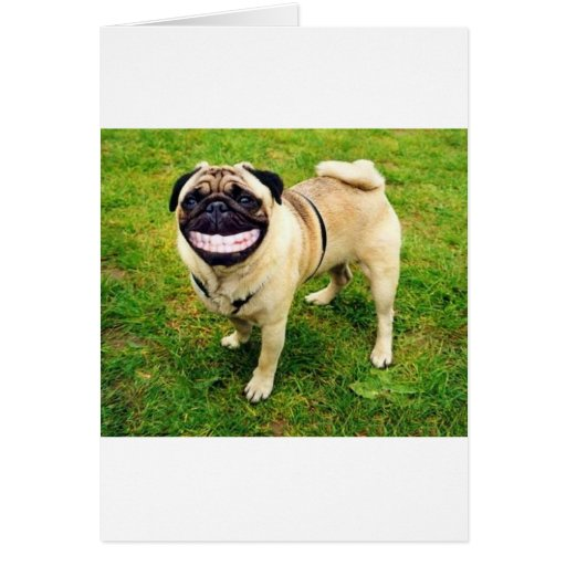dog smile pug cute card