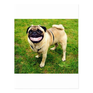 dog smile pug cute postcards