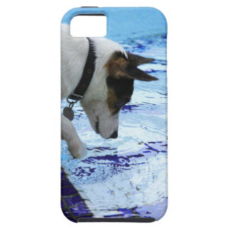 Dog touching water at the swimming pool case for the iPhone 5