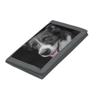 dog tri-fold wallets