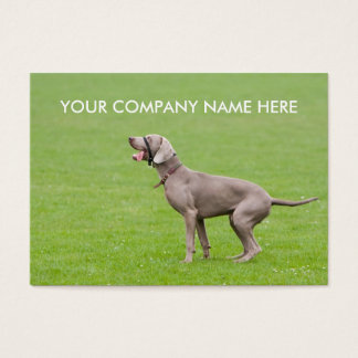 Dog Weimaraner business card obedience training