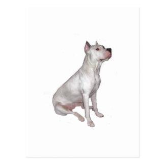 Dogo Argentino (Argentinian Mastiff) Postcard