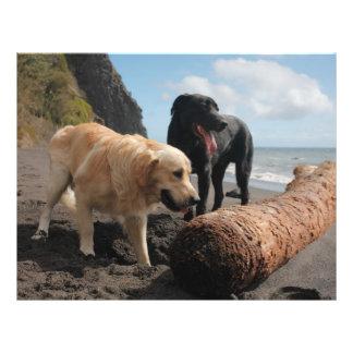 Dogs at the beach 21.5 cm x 28 cm flyer